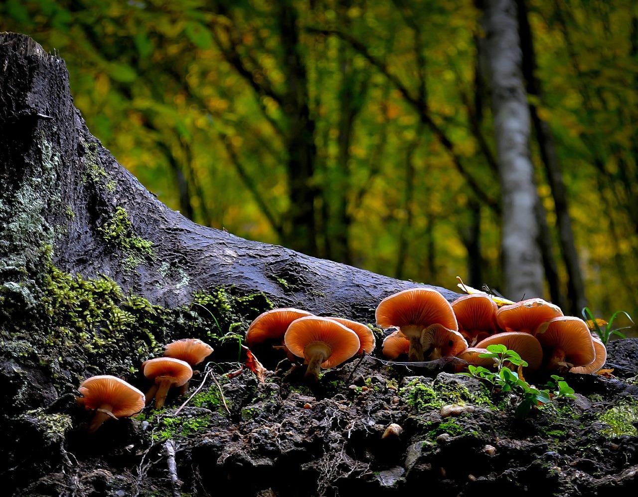 mushroom-411729_1280